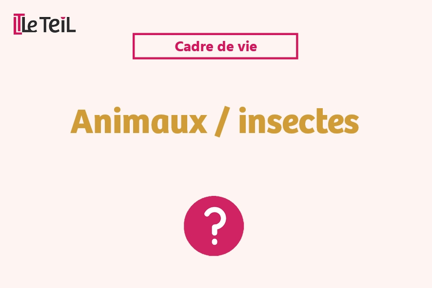 Animaux insectes